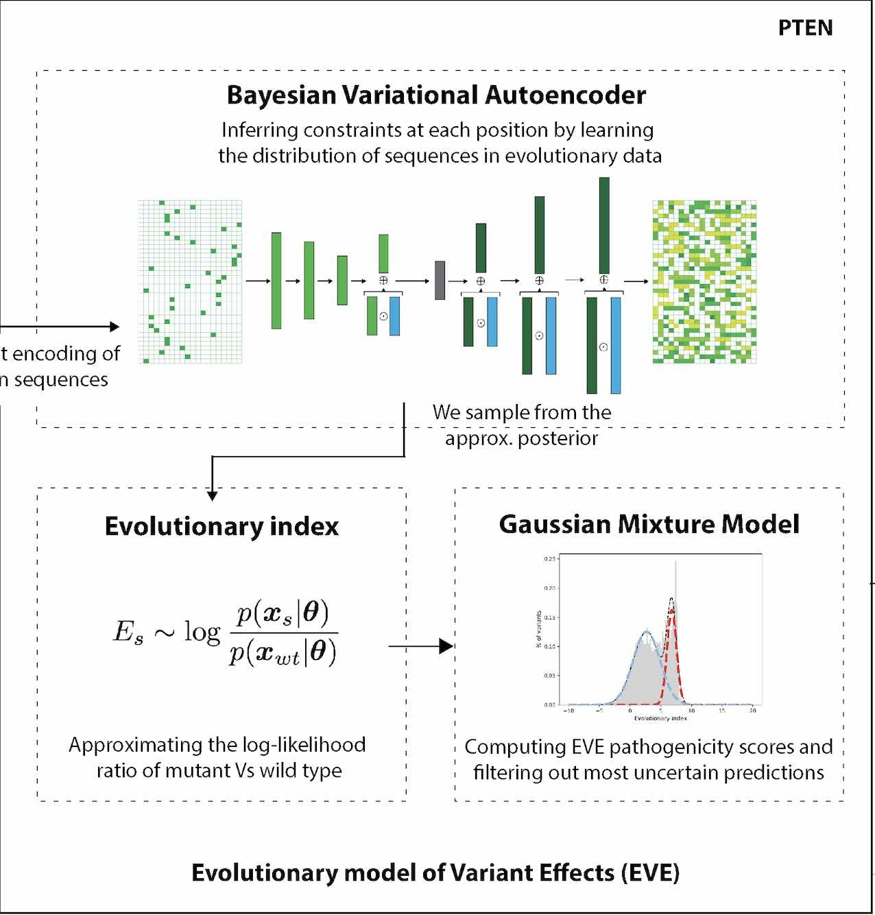 Large-scale clinical interpretation of genetic variants using evolutionary data and deep learning